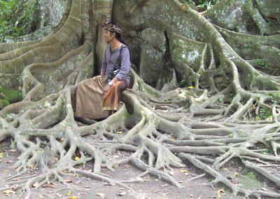 Bali - Baumwurzeln
